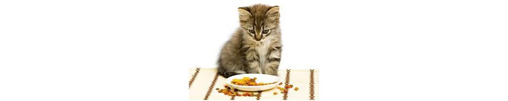 Nutrizione per gatti - età e sensibilità